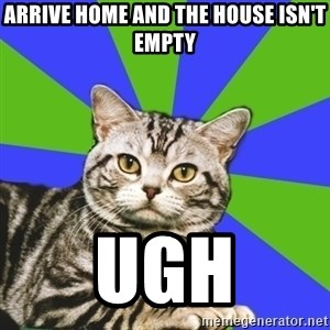 Introvert Cat - Arrive home and the house isn't empty ugh