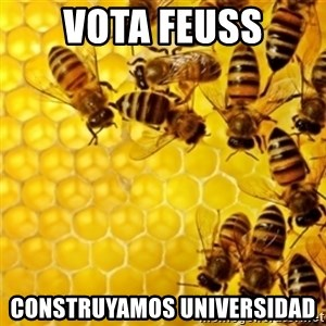 Honeybees - vota feuss construyamos universidad
