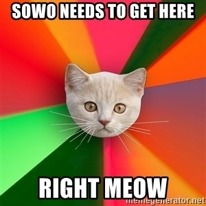 Advice Cat - sowo needs to get here right meow