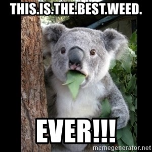 Koala can't believe it - this.is.the.best.weed. ever!!!