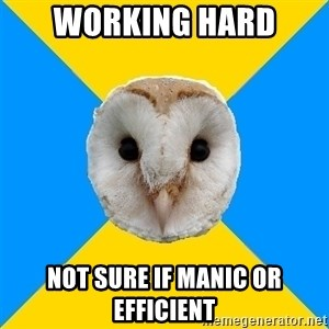 Bipolar Owl - working hard not sure if manic or efficient