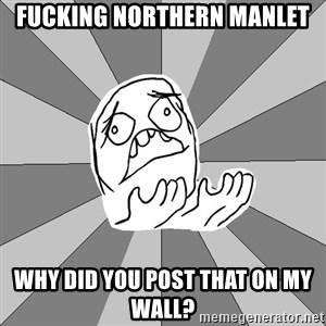 Whyyy??? - FUCKING NORTHERN MANLET WHY DID YOU POST THAT ON MY WALL?
