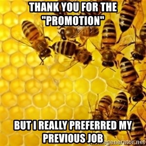 """Honeybees - thank you for the """"promotion"""" but i really preferred my previous job"""