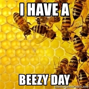Honeybees - I HAVE A BEEZY DAY