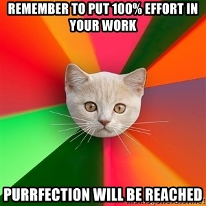 Advice Cat - remember to put 100% effort in your work purrfection will be reached