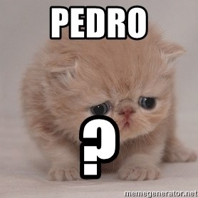 Super Sad Cat - pedro ?