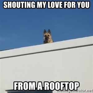 Roof Dog - Shouting my love for you from a rooftop