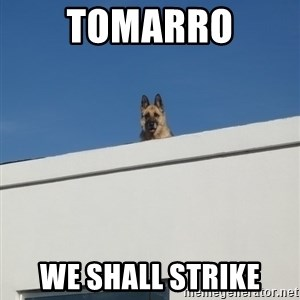 Roof Dog - tomarro we shall strike