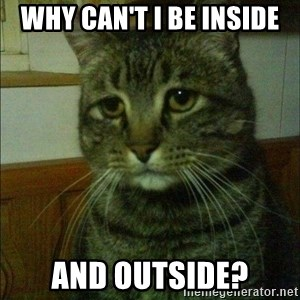 Depressed cat 2 - WHY CAN'T I BE INSIDE AND OUTSIDE?