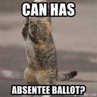Begging Cat - can has absentee ballot?