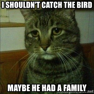 Depressed cat 2 - i shouldn't catch the bird maybe he had a family
