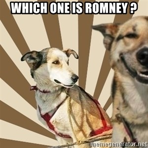 Stoner dogs concerned friend - WHICH ONE IS ROMNEY ?