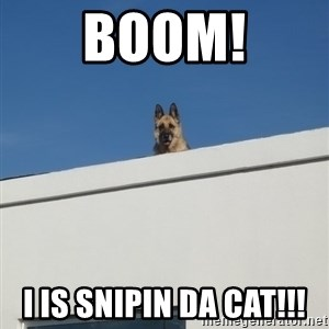 Roof Dog - BOOM! I IS SNIPIN DA CAT!!!