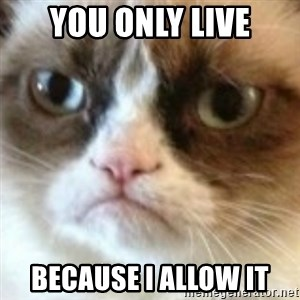 angry cat asshole - You only live because I allow it