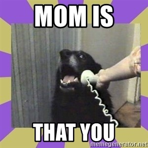 Yes, this is dog! - MOM IS  THAT YOU