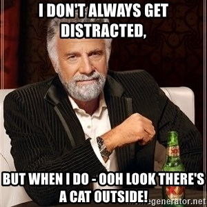 The Most Interesting Man In The World - i don't always get distracted, but when i do - ooh look there's a cat outside!