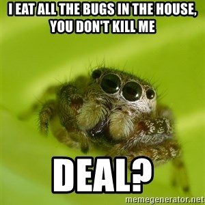 Spiderbro - I EAT ALL THE BUGS IN THE HOUSE, YOU DON'T KILL ME DEAL?
