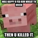Minecraft PIG - WAS HAPPY U FED HIM WHEAT TO BREED THEN U KILLED IT.