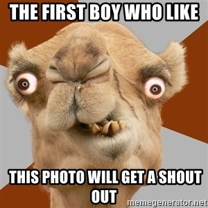 Crazy Camel lol - THE FIRST BOY WHO LIKE   THIS PHOTO WILL GET A SHOUT OUT