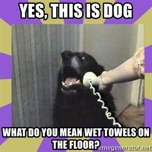 Yes, this is dog! - Yes, this is dog what do you mean wet towels on the floor?