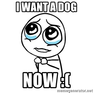 pleaseguy  - I WANT A DOG NOW :(