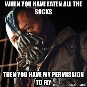 Only then you have my permission to die - when you have eaten all the socks then you have my permission to fly