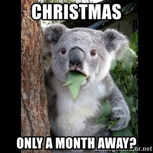Koala can't believe it - christmas only a month away?