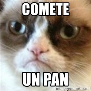 angry cat asshole - COMETE UN PAN