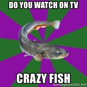 Judgemental Catfish - do you watch on tv  crazy fish