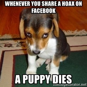 Sad Puppy - Whenever you share a hoax on facebook a puppy dies