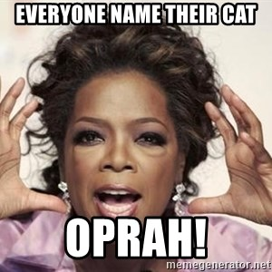 oprah - Everyone Name their cat Oprah!