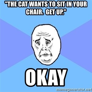 """Okay Guy - """"the cat wants to sit in your chair.  get up."""" okay"""