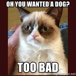 Tard the Grumpy Cat - oh you wanted a dog? too bad