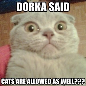 GEEZUS cat - DORKA SAID CATS ARE ALLOWED AS WELL???