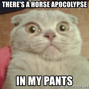 GEEZUS cat - THere's a horse apocolypse in my pants