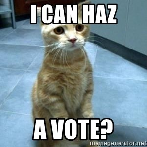 Sad Kitty - I CAN HAZ a vote?