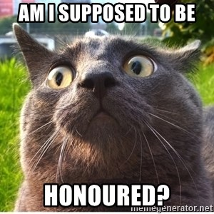 Confused Cat - am i supposed to be honoured?