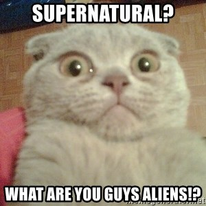 GEEZUS cat - SUPERNATURAL? WHAT ARE YOU GUYS ALIENS!?