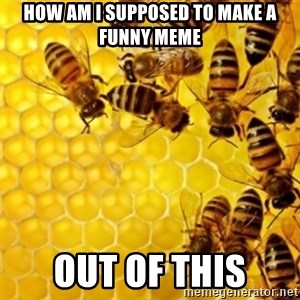 Honeybees - how am i supposed to make a funny meme out of this