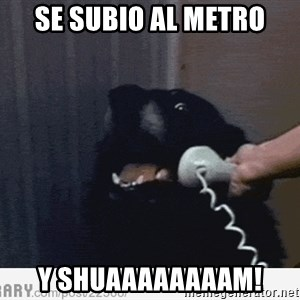 Hello This is Dog - se subio al metro y shuaaaaaaaam!