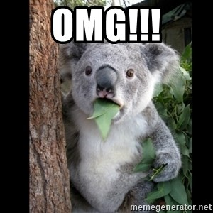 Koala can't believe it - OMG!!!