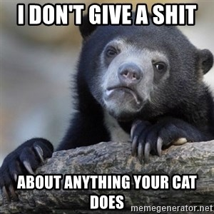Confession Bear - I don't give a shit  about anything your cat does