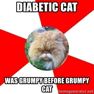 Diabetic Cat - diabetic cat was grumpy before grumpy cat