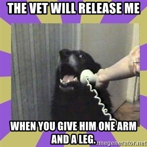 Yes, this is dog! - The Vet will release me when you give him one arm and a leg.