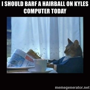i should buy a boat cat - I should barf a hairball on kyles computer today
