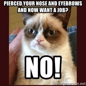 Tard the Grumpy Cat - pIERCED YOUR NOSE AND EYEBROWS AND NOW WANT A JOB? NO!