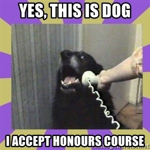 Yes, this is dog! - Yes, this is dog I accept honours course