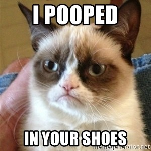 Grumpy Cat  - I pooped in your shoes