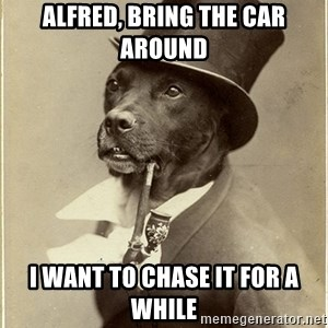rich dog - Alfred, bring the car around i want to chase it for a while
