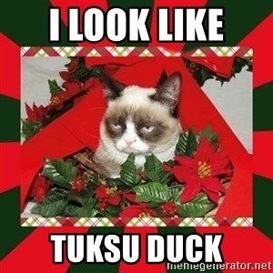 GRUMPY CAT ON CHRISTMAS - i look like  tuksu duck